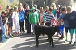 Stanko calf at school